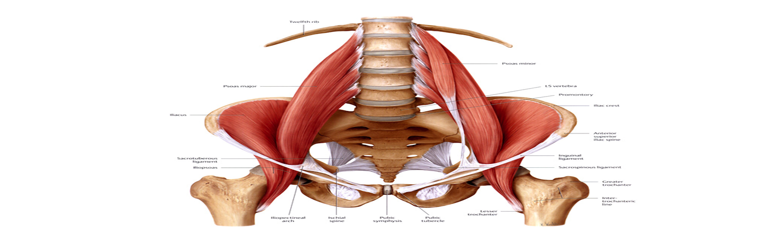 SMR FOR BACK PAIN: PSOAS MUSCLE