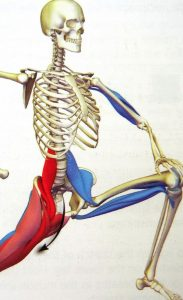 Psoas Stretch in Action